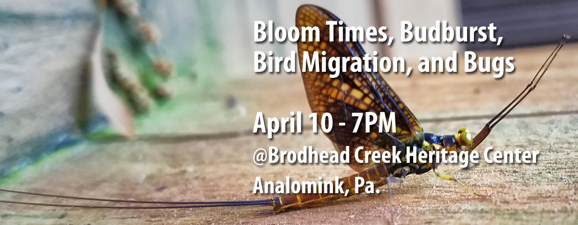 April Meeting at Brodhead Creek Heritage Center Details Bloom Times, Budburst, Bird Migration, and Bugs